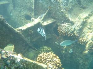 沈没船付近の海中